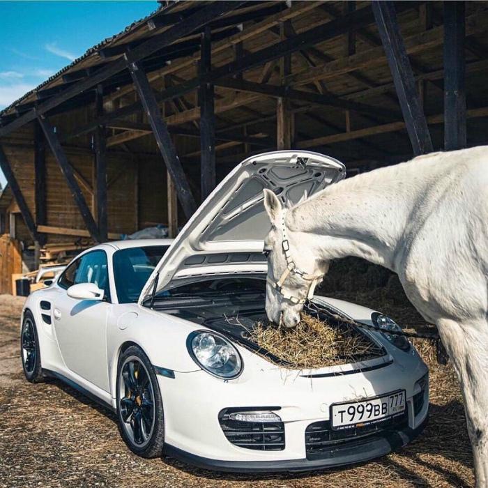 Роскошная кормушка для коня. | Фото: Seldon.News.