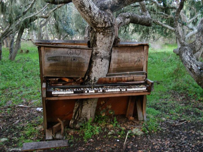 Дерево и старый рояль.