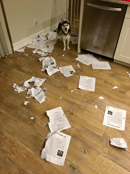 Домашнее задание съела собака! | Фото: Pinterest.