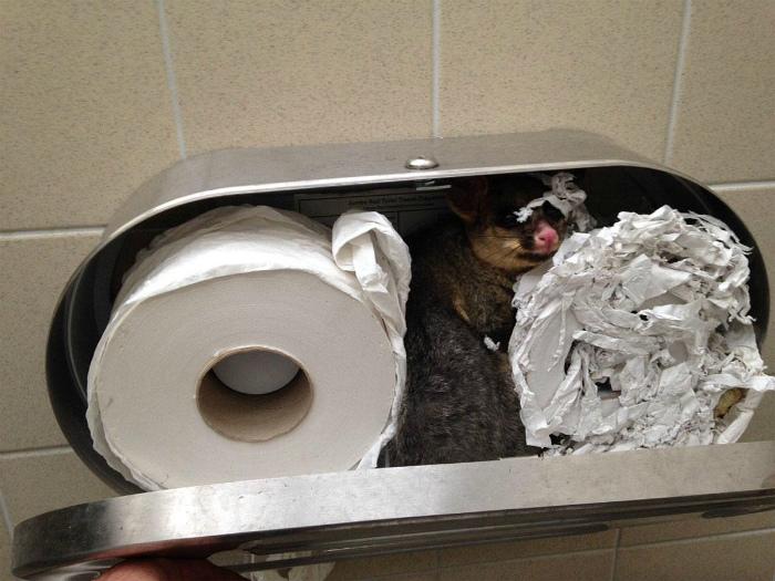 Туалетная бумага для гостя.