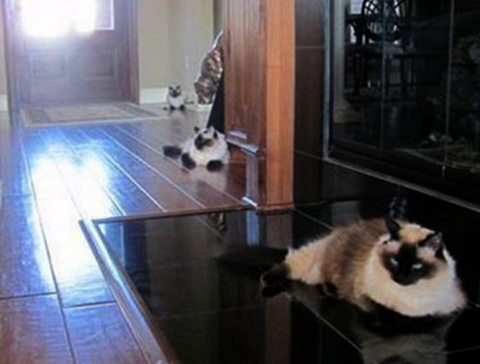 По мнению Novate.ru, у этих котов и имя одно. | Фото: Досенг.