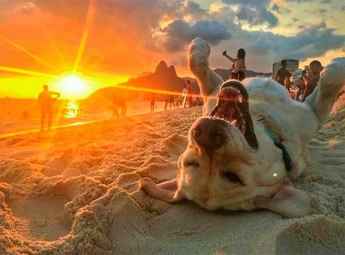 Счастливый пес нежится в лучах солнца.