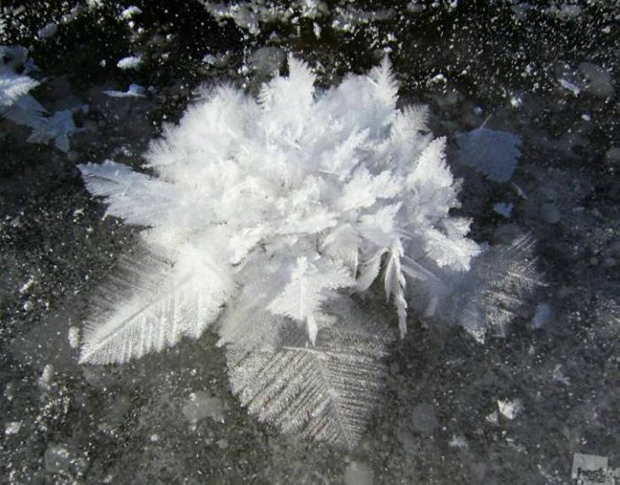 По информации Novate.ru это ледяной коралл Антарктиды.