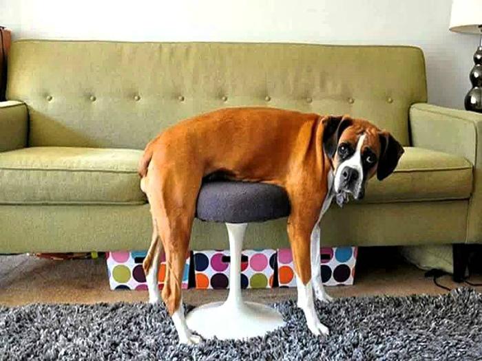 По мнению Novate.ru, именно так выглядит безысходность! | Фото: Life With Dogs.