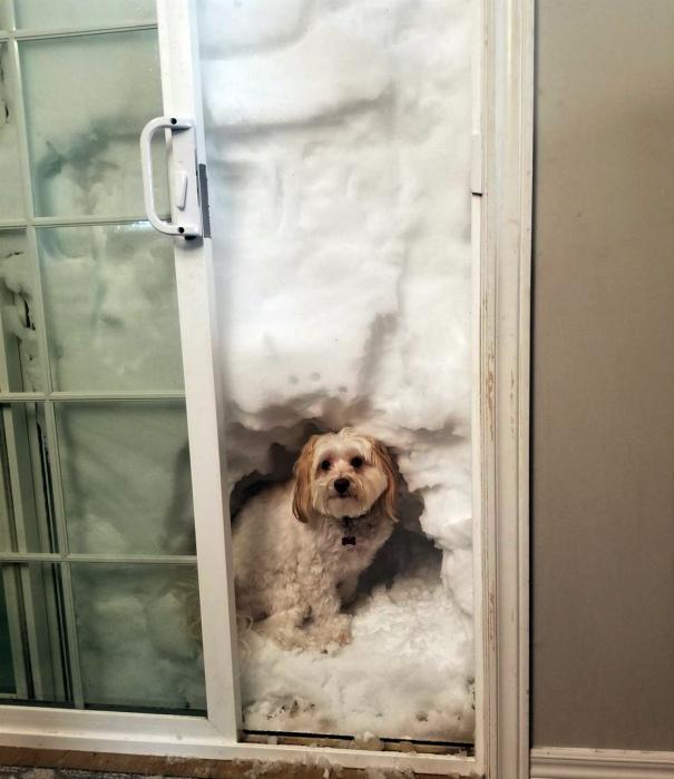 По мнению Novate.ru, собака рассчитывала на какую-то другую прогулку... | Фото: Urod.ru.