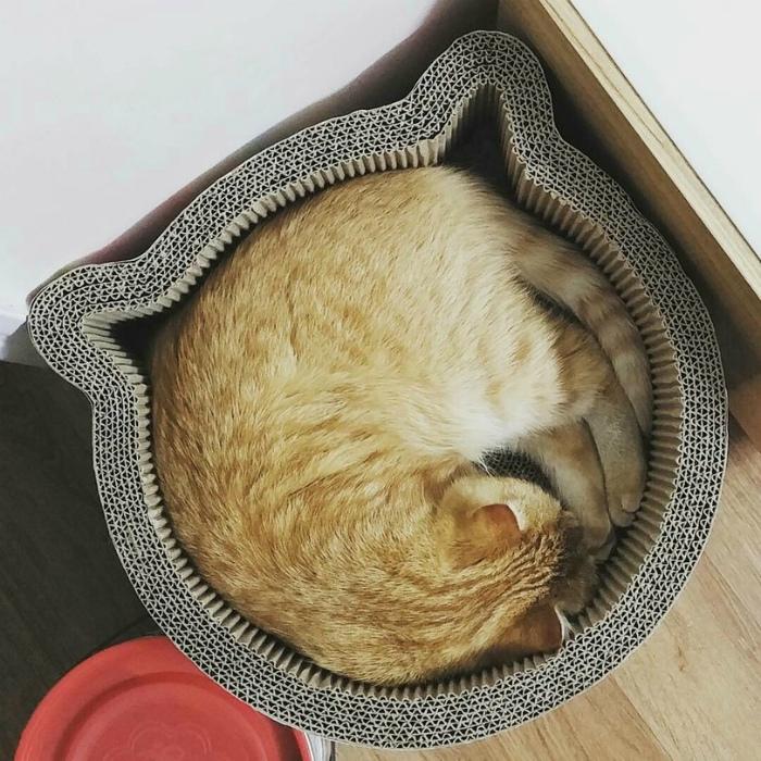 Котик в формочке.