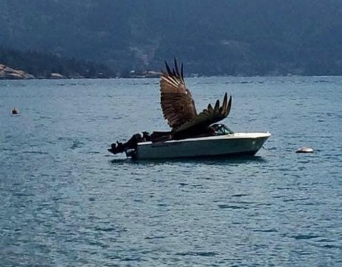 Крылатая лодка. | Фото: Тролльно.