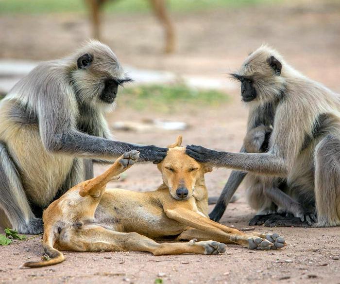 Собака и массажисты.