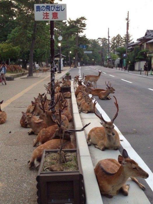 Сейчас где-то в Японии. | Фото: Pinterest.