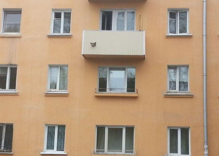 За порядком на балконе следит бдительный пес.
