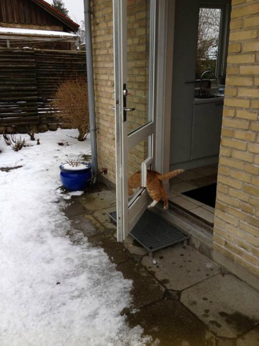 Кот не ищет легких путей. | Фото: BlazePress.