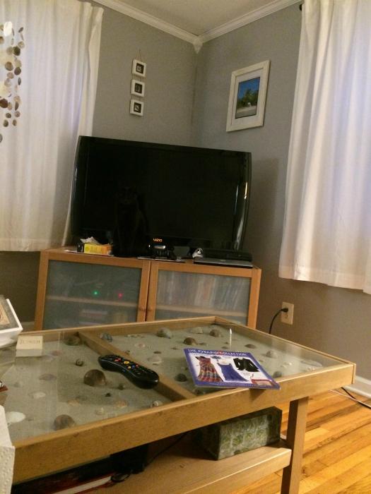 Черный кот у черного экрана.