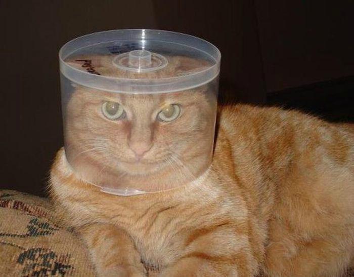 Кот в шлеме.