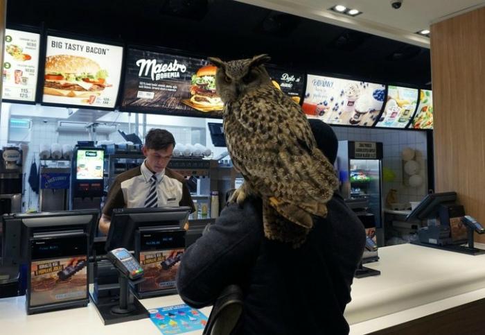 Хорошо, что с совами везде можно! | Фото: я болтушка.