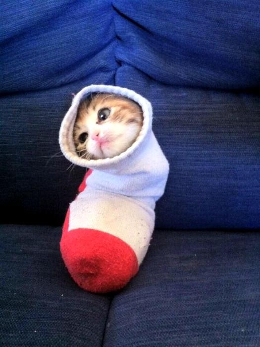 Компактный котенок в носке.