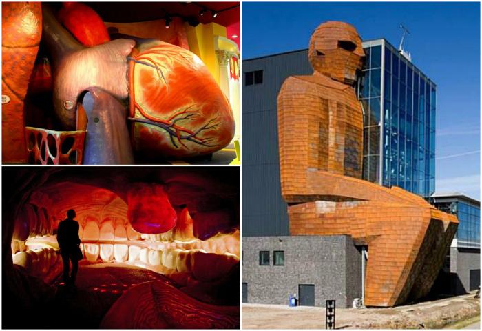 Музей человеческого тела, Нидерланды.