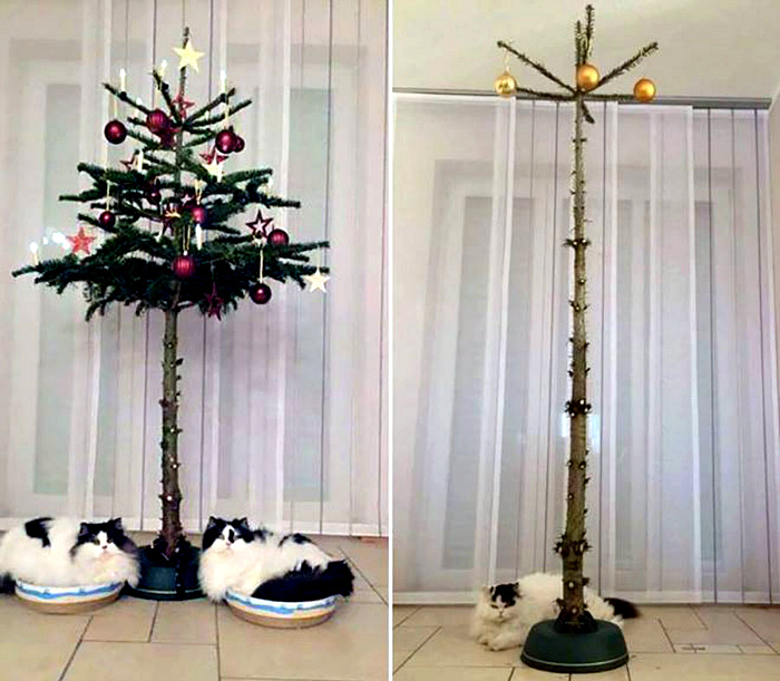 Коты против елок.