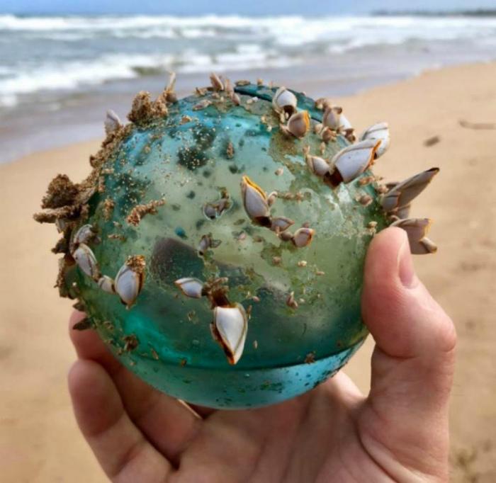 Стеклянный шар с молюсками.