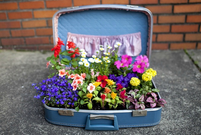 Небольшая клумба в чемодане.