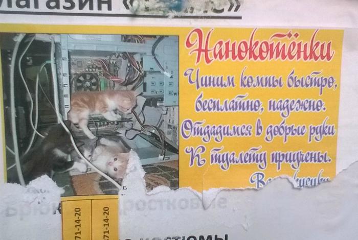 Котята программисты.