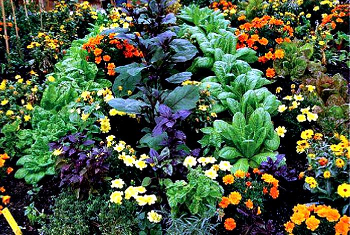 Защита растений от вредителей.