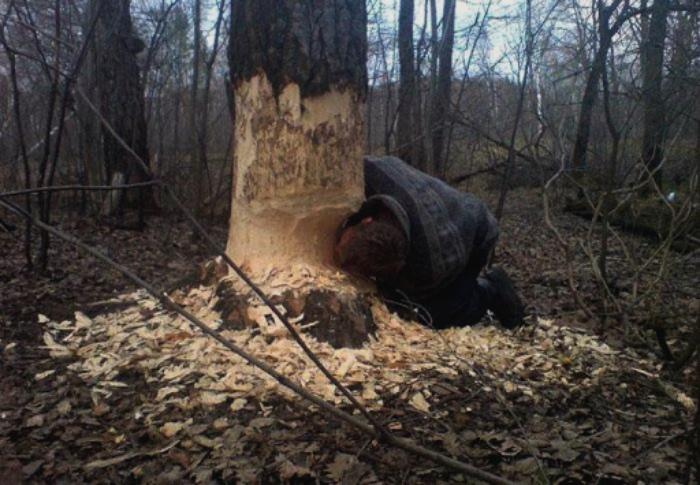 «Это дерево такое аппетитное, вы не находите?» | Фото: VIPSTORY.