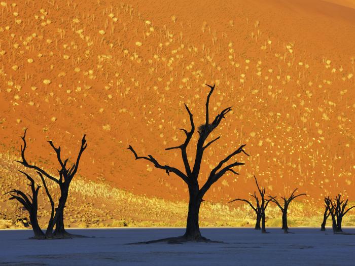 Пустынный пейзаж в Намибии.