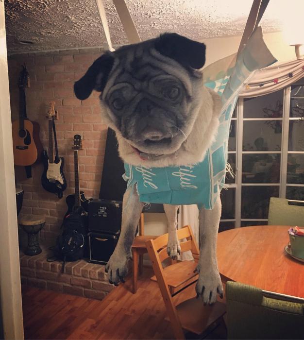 «У собаки нет шансов!» | Фото: Reddit.