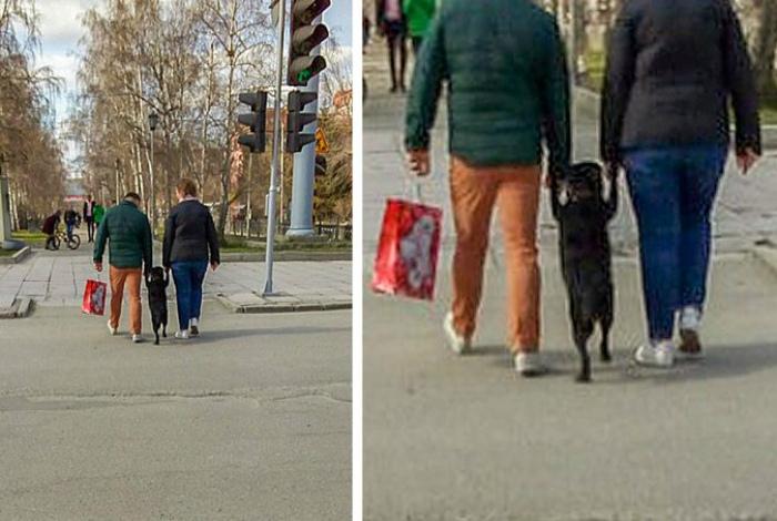 Научили собаку ходить на задних лапах и радуются! | Фото: Makataka.su.