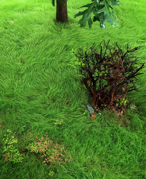 Удивительный рисунок травы.