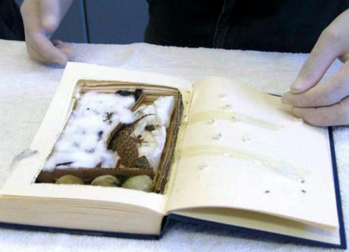 Маленький геккон в книге.