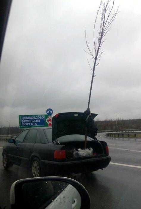 Транспортировка дерева.