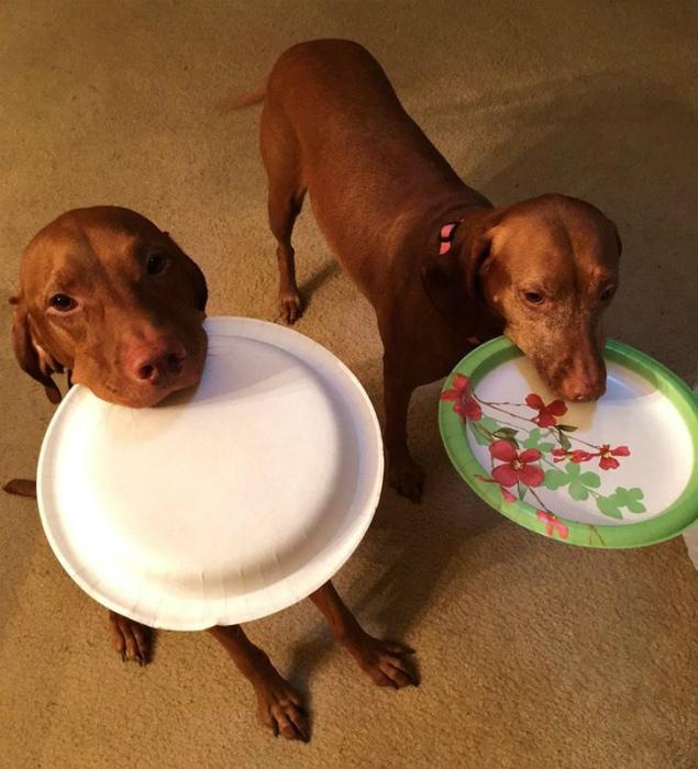 Похоже, собачки проголодались. | Фото: Тролльно.