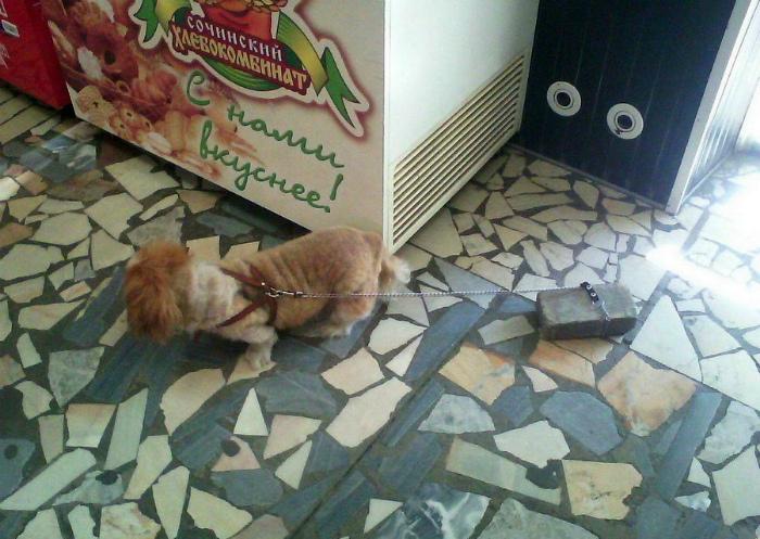 Собака с утяжелителем. | Фото: WarNet.ws.