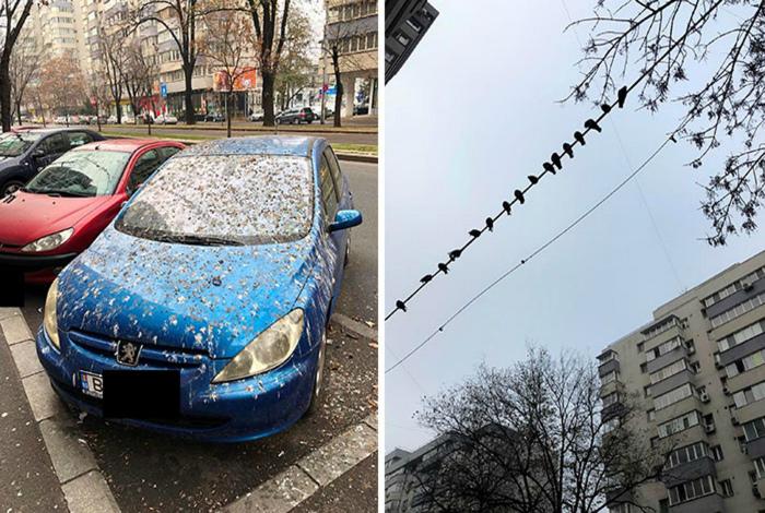 Птицы хорошо поработали над оформлением машины. | Фото: Corriere.