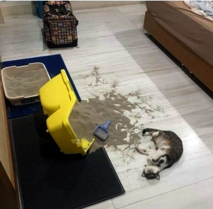 Барсик, ты пьян, иди спать! | Фото: Вообще, ОГОНЬ!.