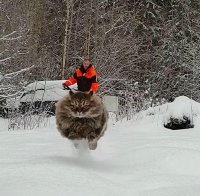 Novate.ru спешит представить вам первого в мире турбо кота! | Фото: Caak.mn.