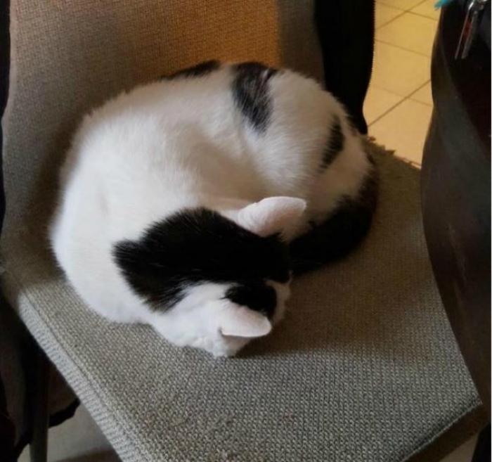 Двухсторонняя кошка.