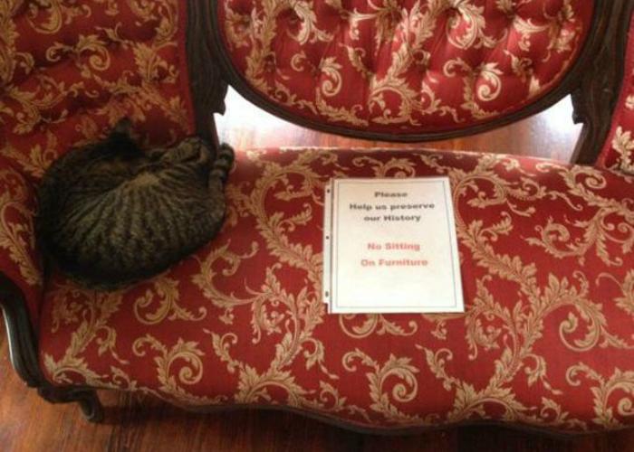 «Пожалуйста, не садитесь на диван. Помогите нам сохранить нашу историю!»