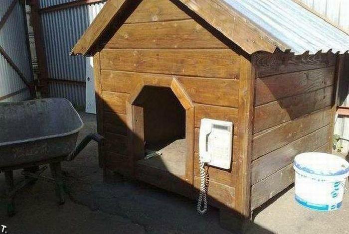 Телефон в собачьей будке - нужная вещь!