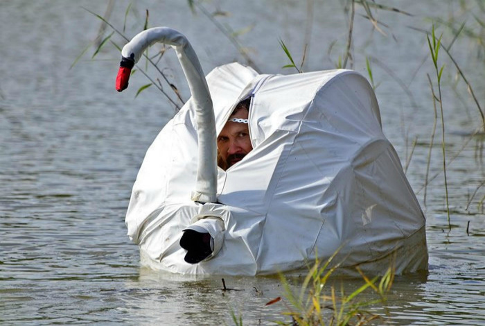 Из жизни белых лебедей... | Фото: StoryFox.