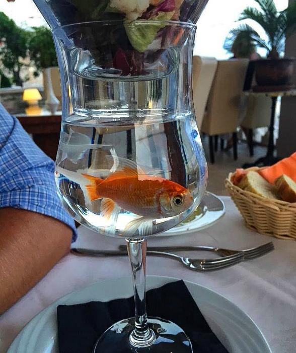 Аквариум с рыбкой. | Фото: Onedio.