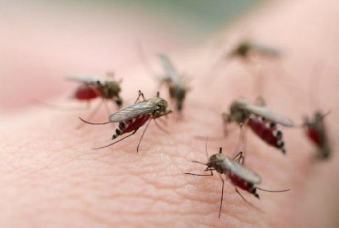 Средство от комаров на даче.