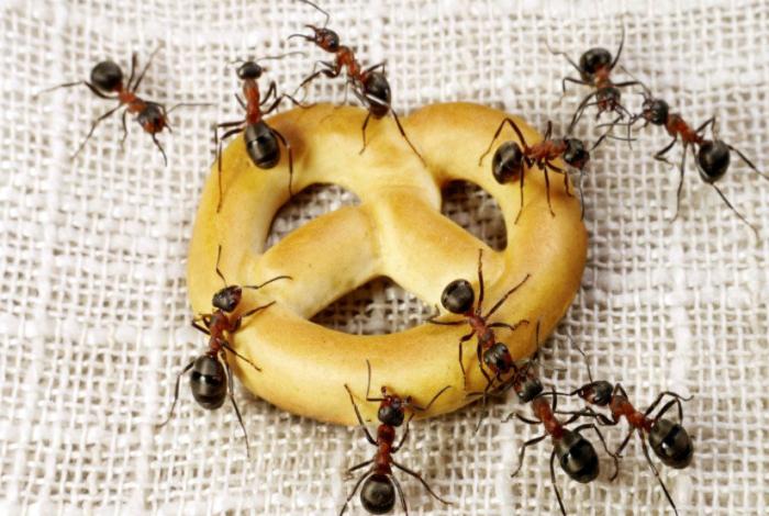 Защита продуктов от муравьев.