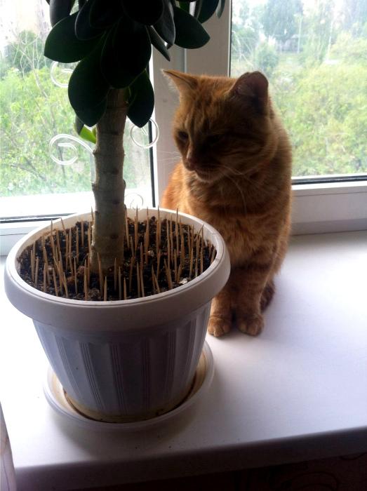 Защита от кота. | Фото: eBaum's World.
