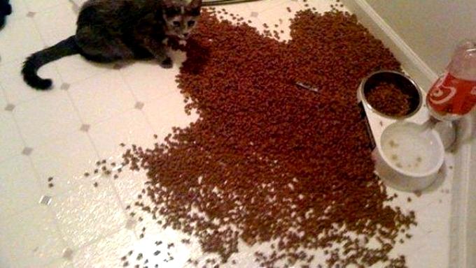 Покормил кота.