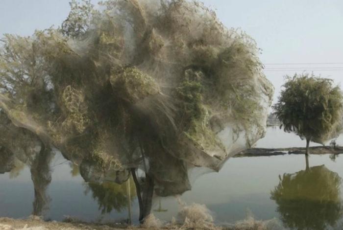 Деревья в паутине.