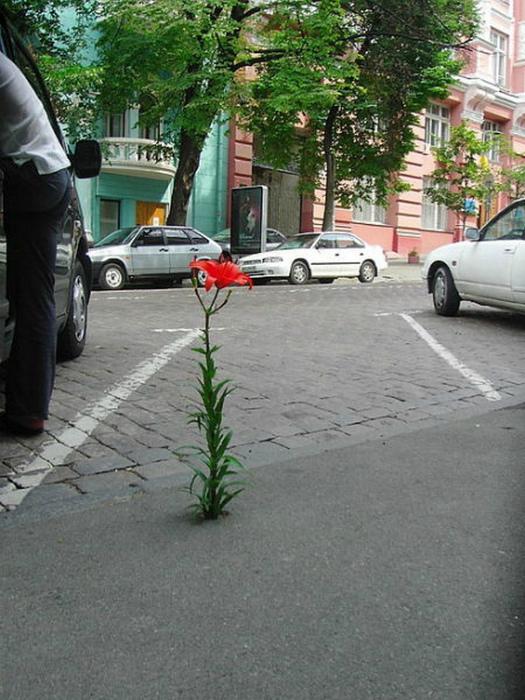 Цветок в каменных джунглях.