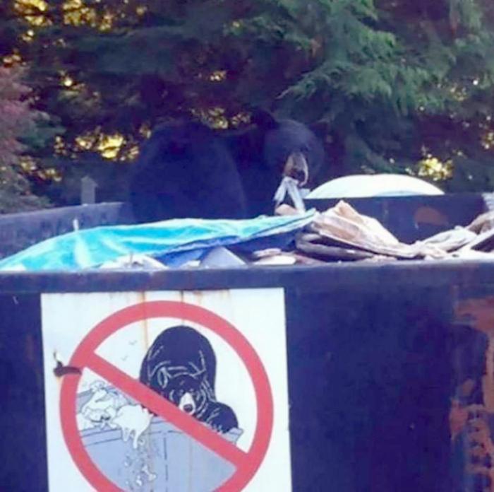 По мнению Novate.ru, запрещающий знак - плохая защита от медведей! | Фото: Koi de neuf.
