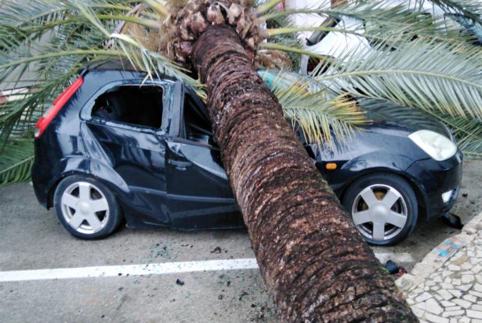 Чей-то автомобиль отдыхает под пальмой. | Фото: Tacataca.